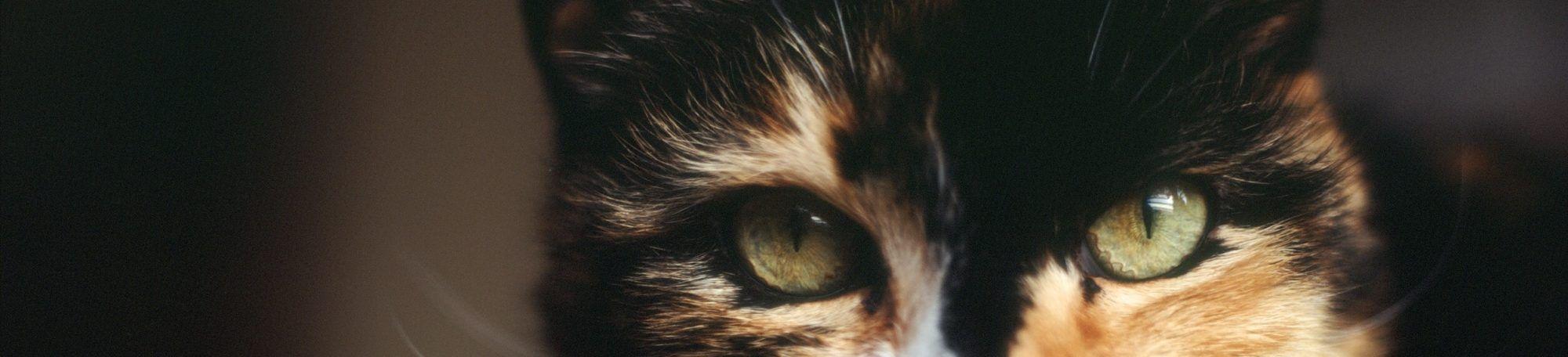 Koci Koci... Drapki!